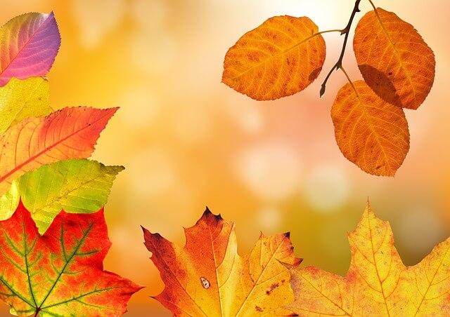 秋、紅葉、