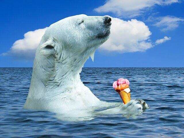 アイスを食べるシロクマ